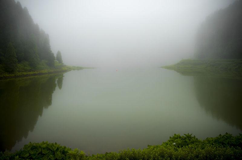 Fog Idyllic