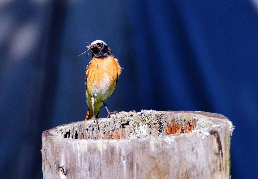 Bird Perching Animal Wildlife Animals In The Wild One Animal Animal Themes Songbird  Close-up No People