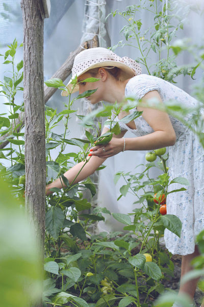 Adult Day Dress Garden Garden Love Garden Photography Gardening Girl Green Color Green Leaves Hat Hat Natural Light Portrait One Person One Woman Only Outdoors Tomato Tomatoes Woman Portrait Woman Working