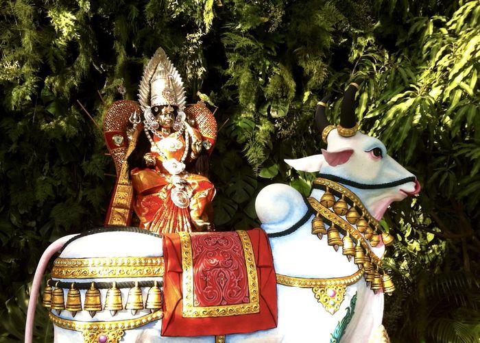 Sri Maha Mariaman Statue in the early morning sunrise Day Hindu Festival Hindu Goddess Holy Cow Morning Light Multi Colored Outdoors Sri Maha Mariaman Tree Vajaya Dasmi Worship