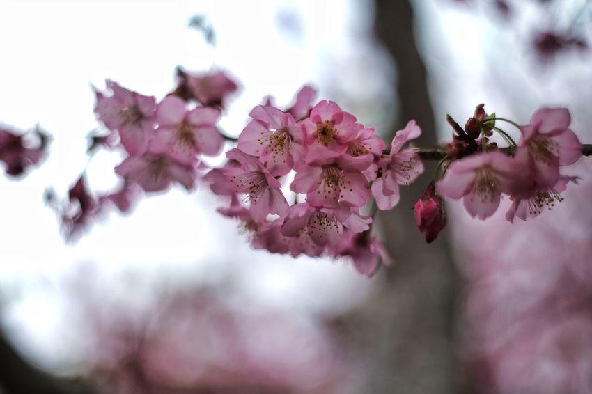 臺灣 Nature Pink Color Close-up Flower No People Beauty In Nature Day Tree Fragility Outdoors Freshness 恩愛農場 Nature Taiwan
