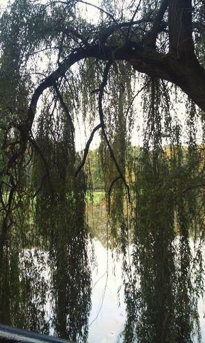 Pszczyna Tree Autumn