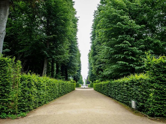 Green Color Tree The Way Forward Outdoors Park - Man Made Space Nature Topiary Day Growth Grass No People Plant Beauty In Nature Scenics Sky Park Sanssouci Sanssouci Park Potsdam Potsdam Park Sanssouci Potsdam Beauty In Nature Nature Green Color Tree