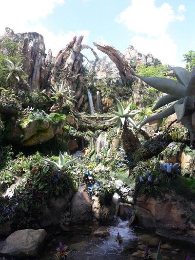 Pandora Animal Kingdom Plant Nature Outdoors Day Cloud - Sky Sky No People Growth Tree