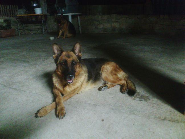 Animal Themes Domestic Animals Dog Animal Darkness And Light EyeEm Gallery Dark Photography Doggy
