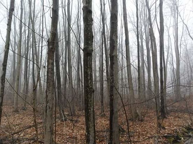 Creepy Forest Fog In The Trees Stillness Might Not Be Alone Here Hamden, Ct