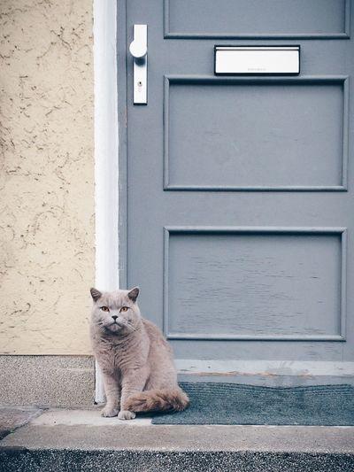 The cat in posing mode. Vscocam Cat Door