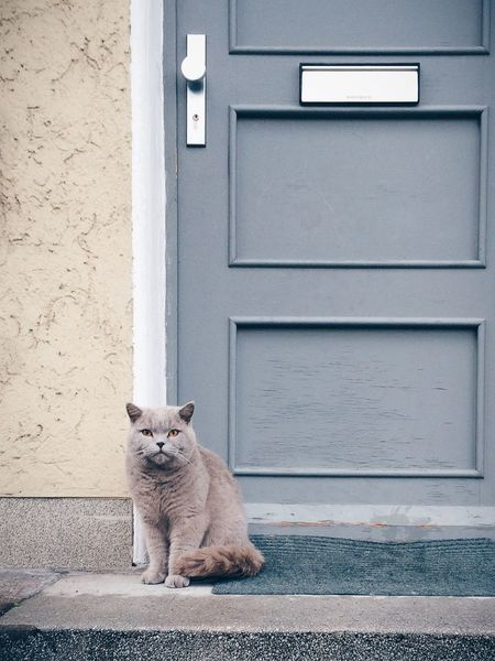 The cat in posing mode. Vscocam Cat Door