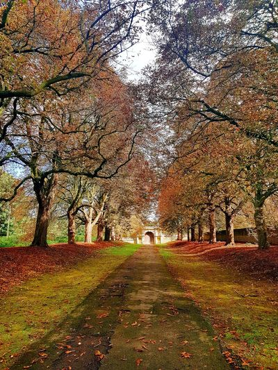 Autumn🍁🍁🍁 Autumn Leaves Nature Trees And Nature Kirby Hall Northamptonshire Path Through The Trees The Week On EyeEm