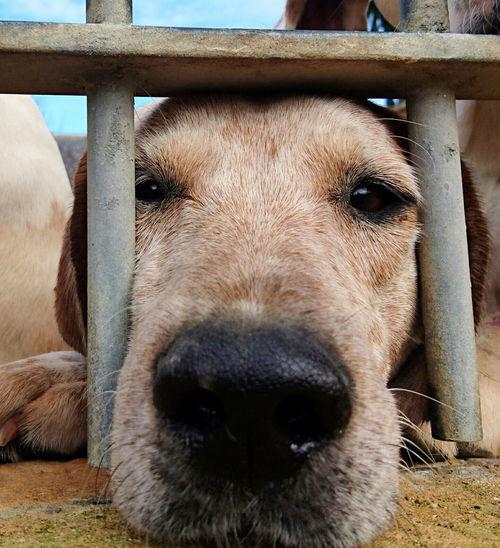 Things I Like Dogslife Doglovers Dogsareawesome Dogs_of_instagram Dogs Of EyeEm Dog Love DogLove Fox Hound 🐺 HoundDog