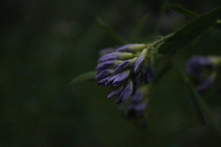Evening Plant