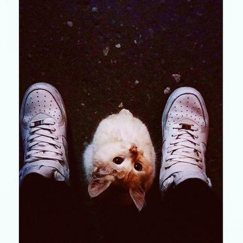 прогулка академия студгородок котёнок Сашенька милостипушистости