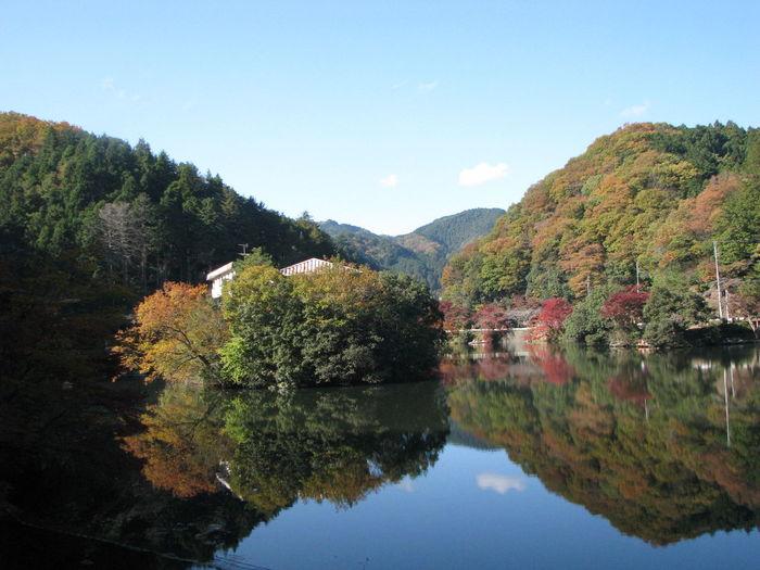 Japan 紅葉 Nature EyeEm Nature Lover