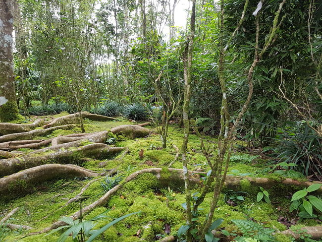 Forest greenery. Forest Environment Tropical Fresh Backgrounds Tree Full Frame Green Color Plant Woods