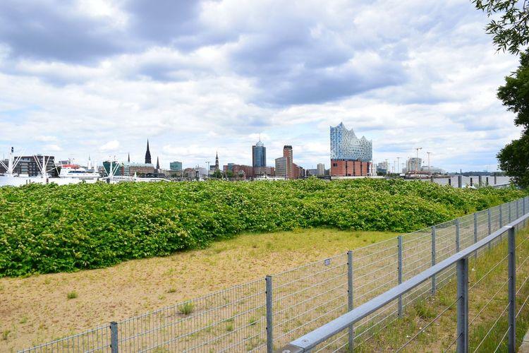 Plants growing by buildings against sky in city
