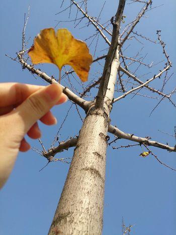 Nature Leaves Enjoying Life