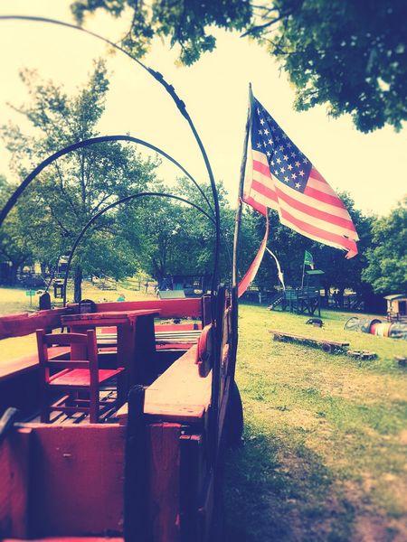 Tree Patriotism Flag Sky Stars And Stripes American Flag American Culture Blooming Grassland Grass Field Farmland Grass Area Flag Pole