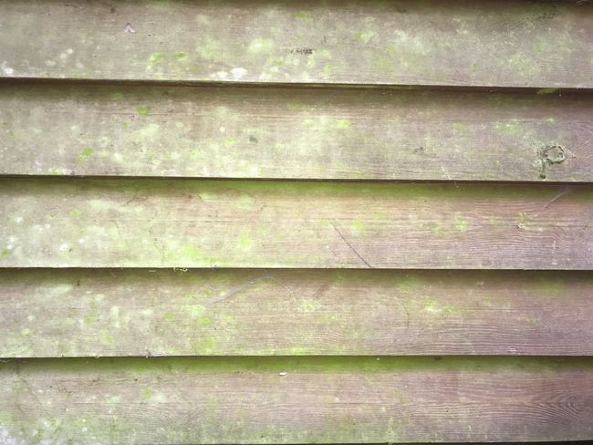 Backgrounds Beauty In Nature Close-up Day Full Frame Green Color In A Row Leaf Nature No People Outdoors Pattern Plank Plant Plant Part Repetition Textured  Weathered Wood Wood - Material