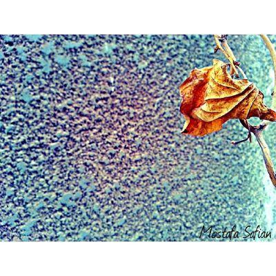 U look like that whan U R Sad :( Love Flower Tree Human