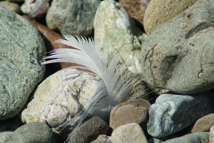 Cayucos Beach Photography On The Beach Beach Southern California Feather  At The Beach