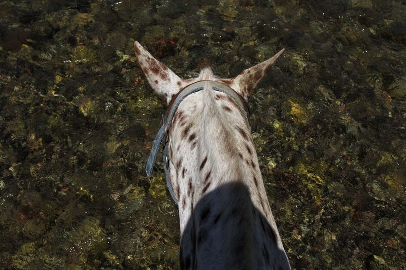 High angle view of horse over water