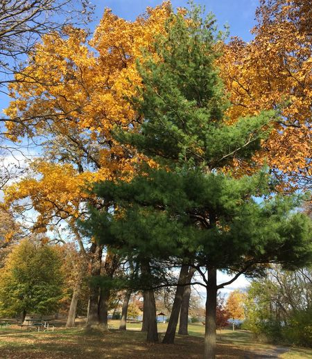 Hugging A Tree Trees Autumn Colors Autumn Leaves Autumn IPSTrees&Leaves IPS2015Fall