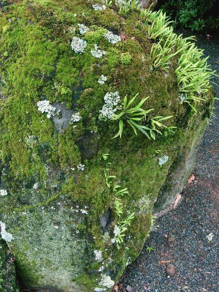 Rock Moss 禅 Zen Japanese Temple Green