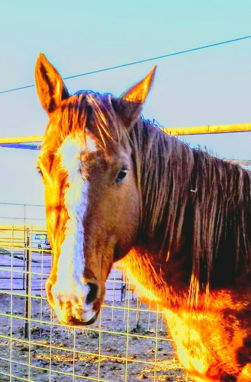 horse, domestic animals, one animal, animal themes, mammal, no people, outdoors, day, close-up, nature, sky
