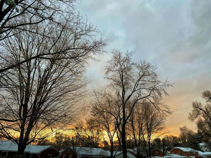 Low angle view of bare trees against sky during sunset