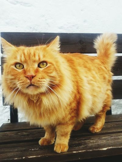 Taking Photos Hello World Picoftheday Eyem Best Shots Karmi Cyprus Catoftheday Cat