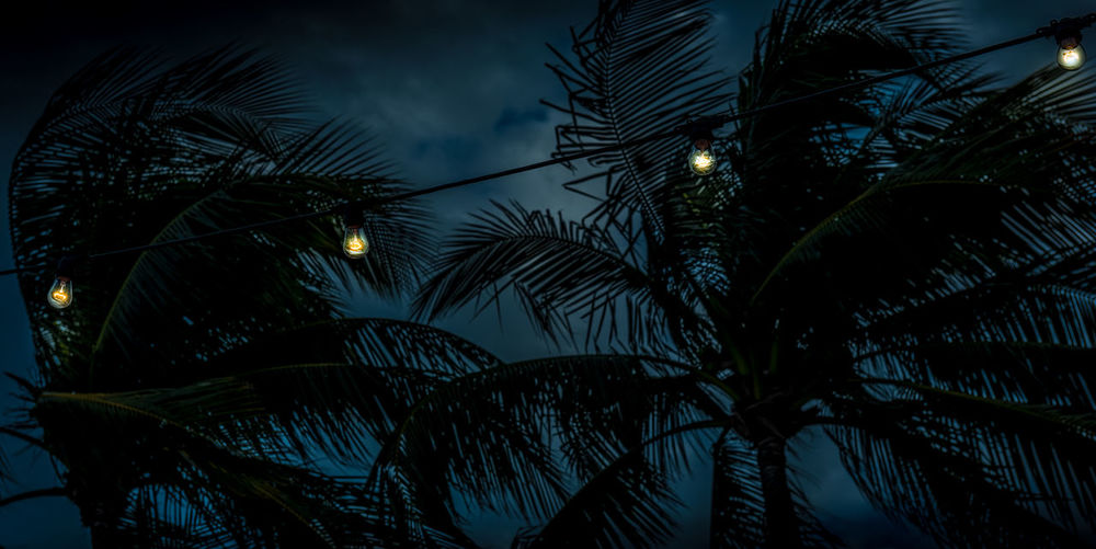 Tropical Ghosts Blue Dark Day For Night Illuminated Light Miami Miami, FL Night Outdoors Palm Tree Silhouette Sky Tree Tropical Climate