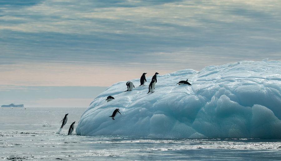 People on frozen sea against sky