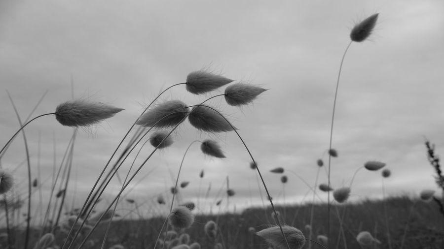 Hare Tail Grass EyeEm Nature Lover Black And White Photography Light & Dark - EyeEm Landscape Seascape Photography Creative Light And Shadow