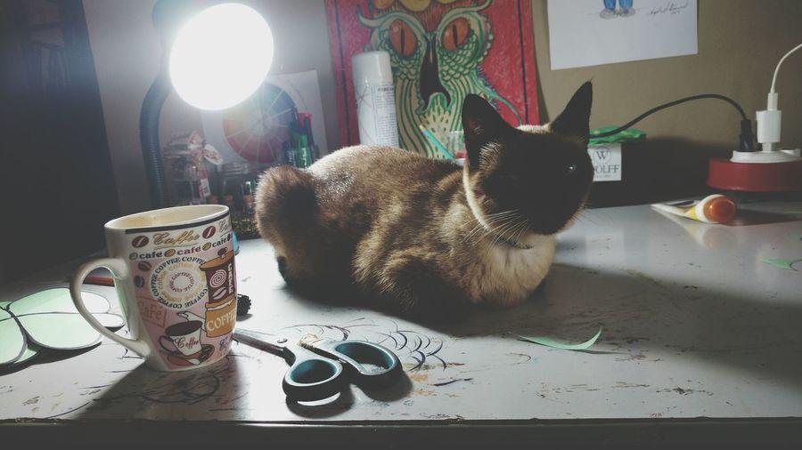 Cat Modern Workplace Culture