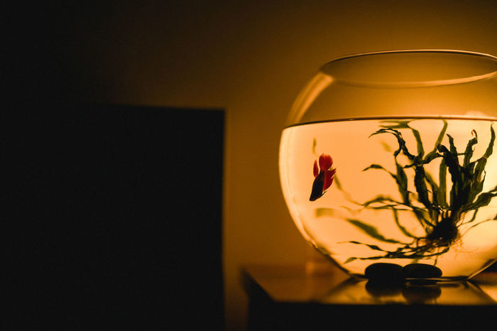 Millie and I are saying Good night. Fishbowl Close-up Fish Bowl Water Fish Pet Water Plant Indoors  Dark Darkness And Light 100 Shades Of Yellow Paint The Town Yellow The Week On EyeEm Home Interior Millie See The Light