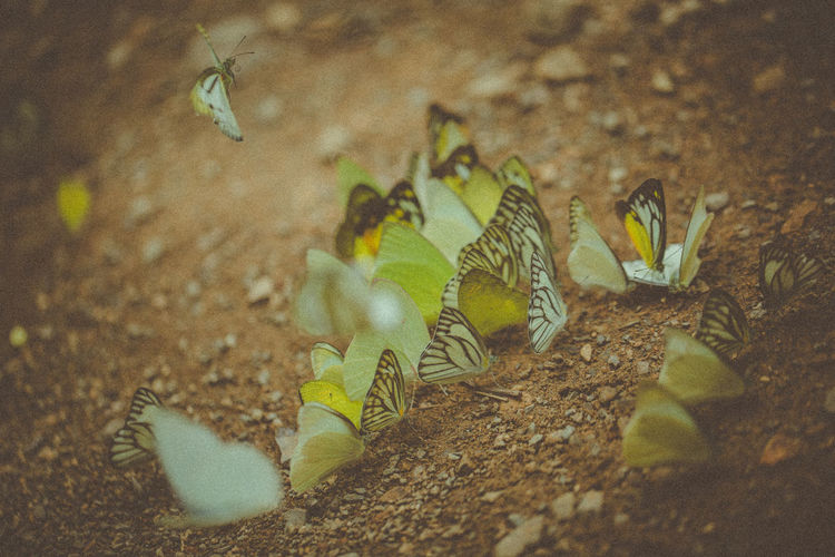 High Angle View Of Butterflies On Ground