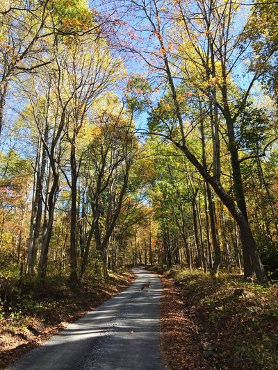 Tree Road The Way Forward Nature Autumn Scenics Forest Tranquility Tranquil Scene Outdoors Beauty In Nature Day Landscape Growth No People Leaf Branch Sky