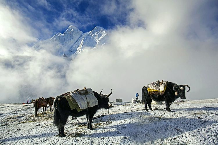 The Outer Worlds Snow ❄ Climbing A Mountain Tibetan  Hiker Outdoor Life China Outdoor Photography On The Road China Photos Hello World