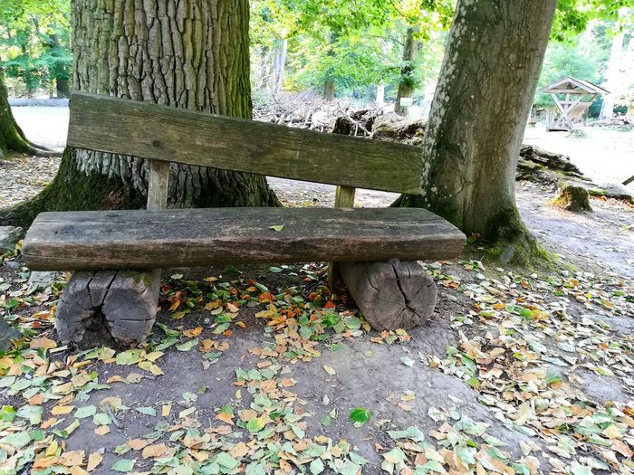 Bench Bench Benches Sit Down No People Forest Rest Resting Place Trees Tree And Bench Bench Seat Day Daylight Tree Tree Trunk Sunlight Close-up