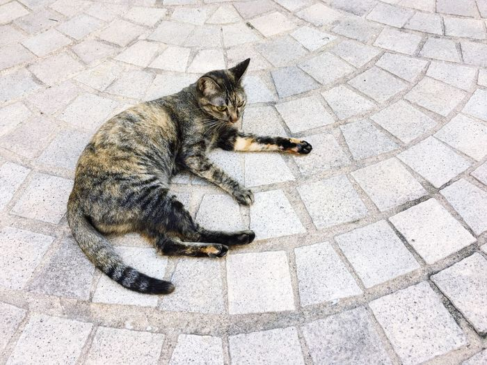 High Angle View Of Cat Lying On Cobblestone