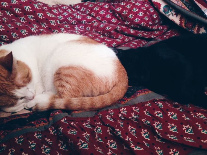 Close-up of cats sleeping on bed