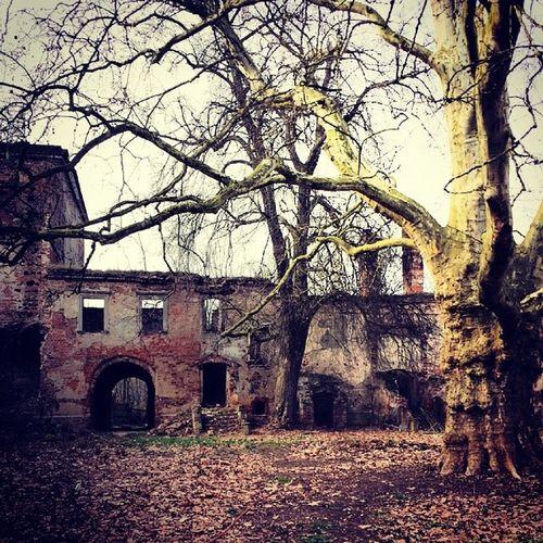 Klasztor Forest