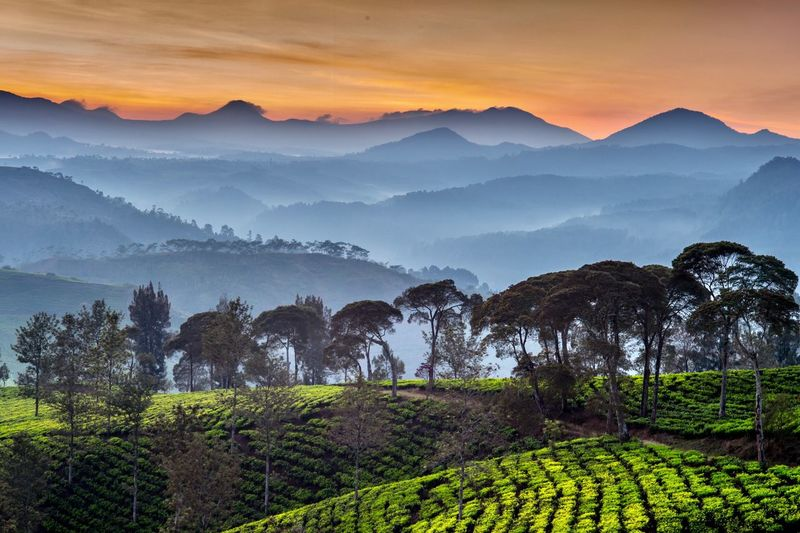 Scenic view of terrace fields and mountains in foggy weather during sunrise