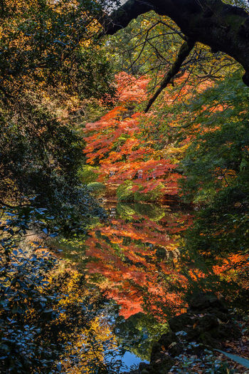 Autumn City Colors Growth Japan Light Nature Plant Reflection Travel Tree Beauty In Nature Branch Change Day First Eyeem Photo Journey Leaf No People Outdoors Park Scenics - Nature Travel Destinations