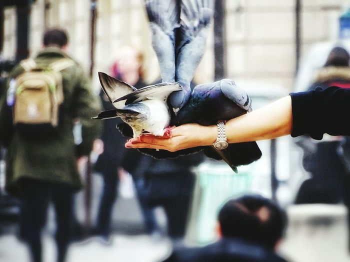 Human Hand Bird Lifestyles Leisure Activity Real People Adults Only Men Day Outdoors People City Adult Human Body Part Street Art Cityscape Paris, France  Eyeem Photography City Photooftheday Travel Destinations Pigeons ATTACK Pigeon Flying Pigeons Life Art Is Everywhere