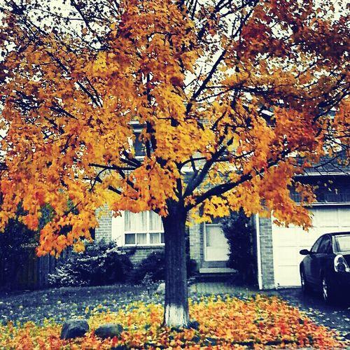#Autumn #fall Enjoying The Colors On My Street.