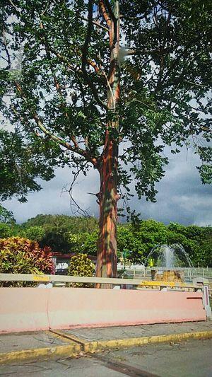 🌲💚 Multicolor Trees