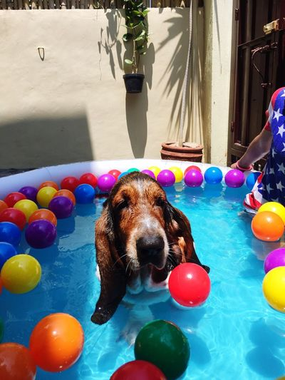 Summertime Ilovemarcus Marcus Basset Hound Dogs Dog