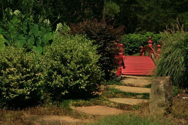 Walkway towards footbridge amidst plants at japanese garden