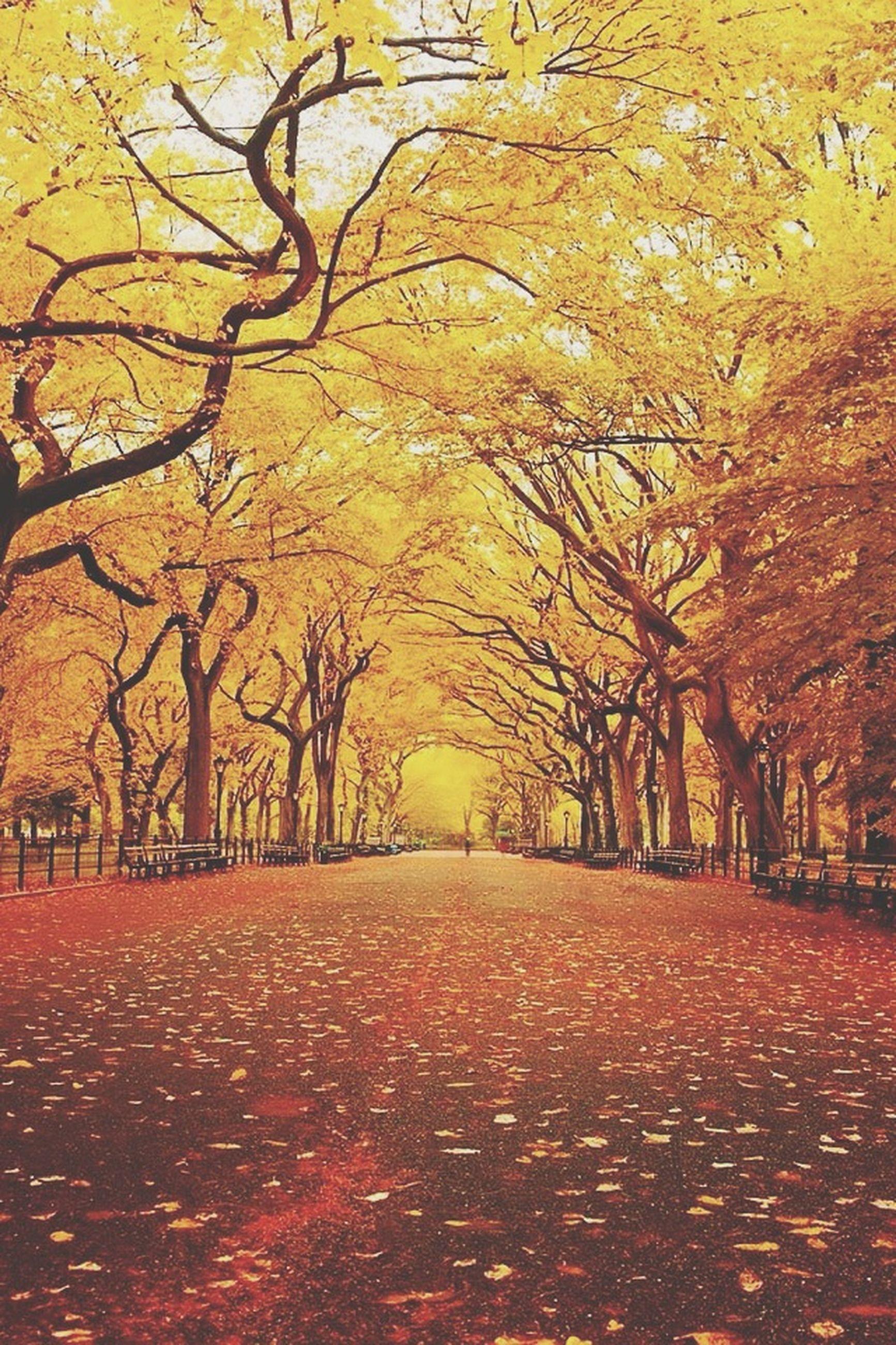 tree, autumn, change, orange color, season, tranquility, nature, branch, yellow, tranquil scene, beauty in nature, scenics, sunset, bare tree, the way forward, road, leaf, outdoors, growth, sunlight